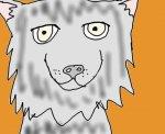 a wolf?