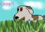 ςοοφ! πθππυ ιν γρασσ (woof! puppy in grass)