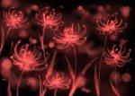 Crimson Flowers